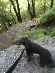 At the Reichenbach Falls
